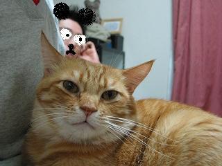 Kotetsu 猫たんぽ3