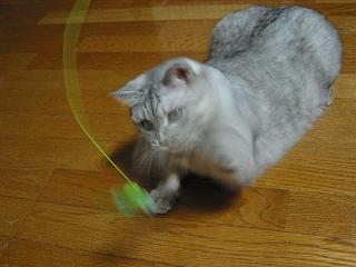 Mint トンボのおもちゃ