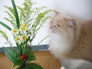 Moca 2007お正月