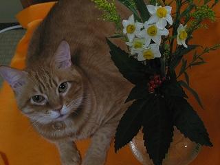 Kotetsu 2007お正月