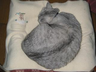 Mint ふんわり名猫 ごま味?