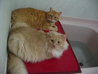 Moca&Kotetsu お風呂