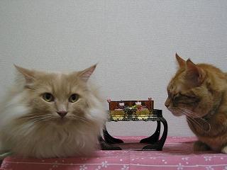 Moca&Kotetsu 桃の節句