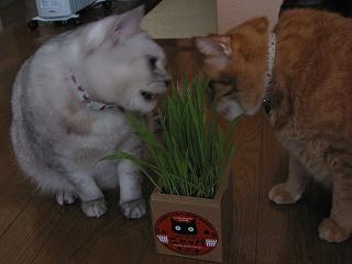 Mint&Kotetsu ニャッパ