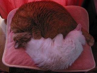 Ktetsu&Jill 寝んね