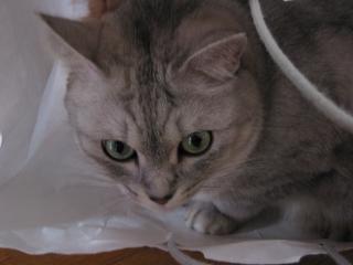 Mint おっきな袋