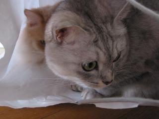 Mint おっきな袋2