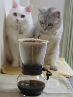 Mint&Jill コーヒー2