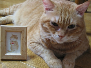 Kotetsu クマにゃんからのプレゼント