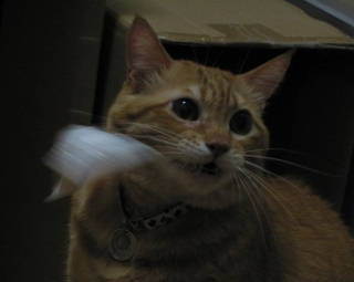 Kotetsu 誕生日2007 5
