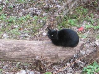 金比羅さんの猫?