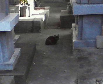 お墓にいたにゃんこ
