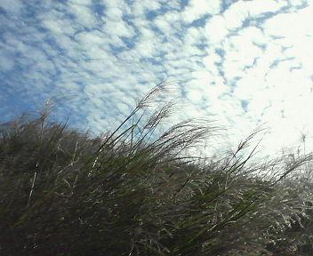 すすきと雲
