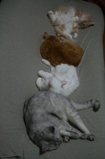 4にゃん 初猫団子2007-3
