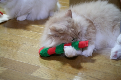 Moca クリスマスのおもちゃ