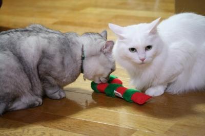 Mint&Jill クリスマスのおもちゃ