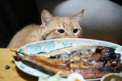 Kotetsu 焼き魚2