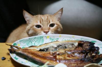 Kotetsu 焼き魚3
