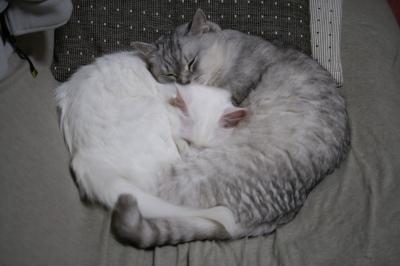 Mint&Jill 一緒に寝たいの4
