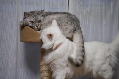 Mint&Jill 一緒に寝たいの
