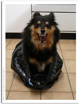 犬を捨てるな!