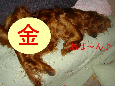 20060416paka