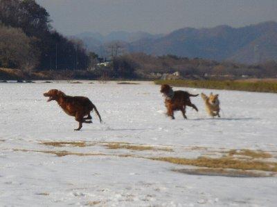 20080204hatagawa5