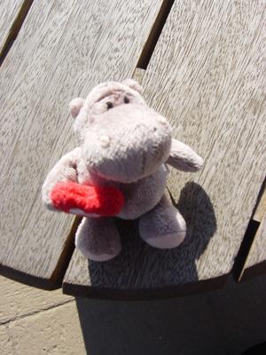 NICI hippo