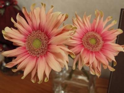 フリフリの花びら