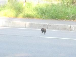 道路を渡るリスさん