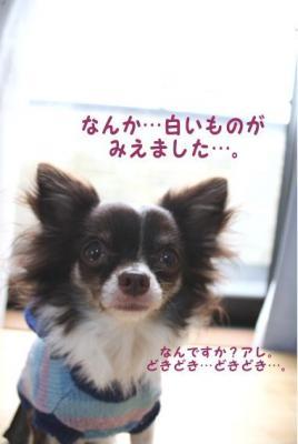 コピー ~ yuki1