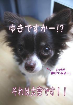 コピー (4) ~ yuki1