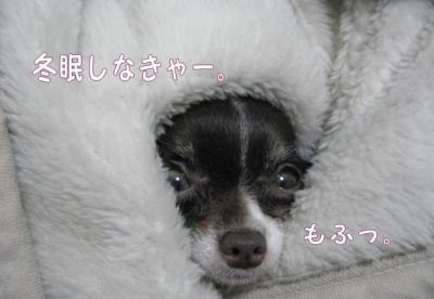 コピー (3) ~ yuki1