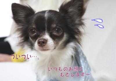 コピー ~ コピー ~ yuki1