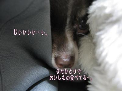 コピー (4) ~ てりたま