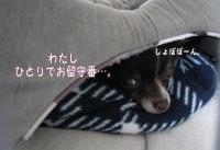 コピー (4) ~ 記念日