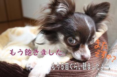 コピー (5) ~ ドリ