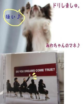 コピー (4) ~ ドリ