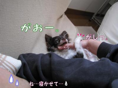 コピー (2) ~ お昼寝
