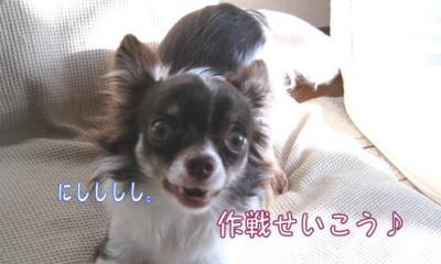 コピー (5) ~ お昼寝