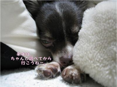 コピー (6) ~ さくら