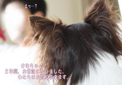 コピー (2) ~ 初恋1