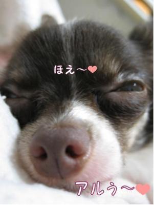 コピー (3) ~ 初恋1