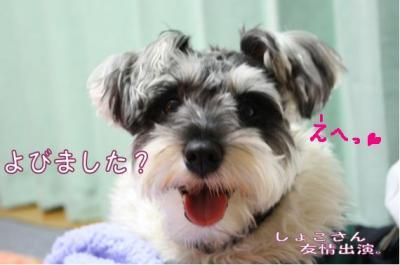 コピー (6) ~ ショコ便