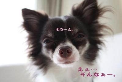 コピー (5) ~ ショコ便