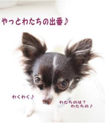 コピー (7) ~ ショコ便