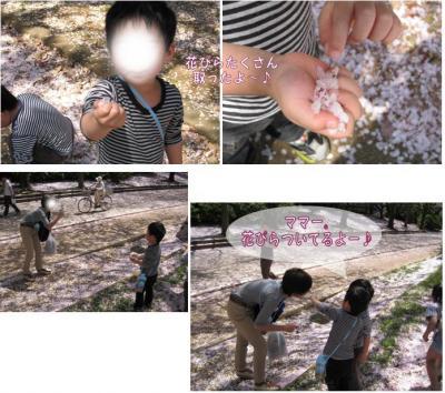 コピー (2) ~ sakura