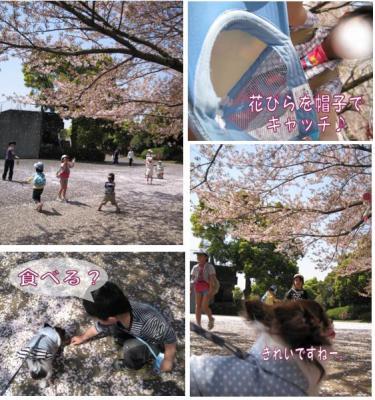 コピー ~ sakura