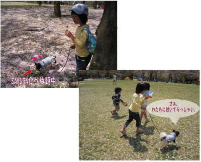 コピー (3) ~ sakura