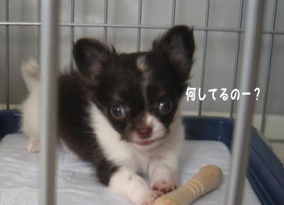 コピー (3) ~ はぐ日